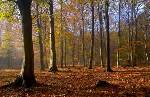 Autumn woods, copyright Linda Wright